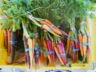 Multi Colored Carrots
