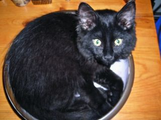 Sophie in a bowl